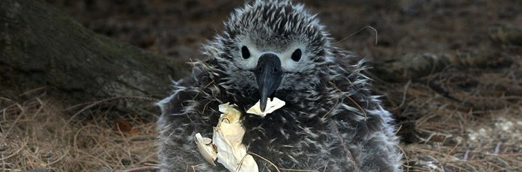 chick-eats-shell